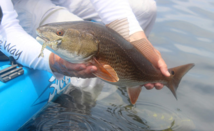 Fall is a great time for bass, redfish, whiting and more as Florida fishing heats up.  In a lot of