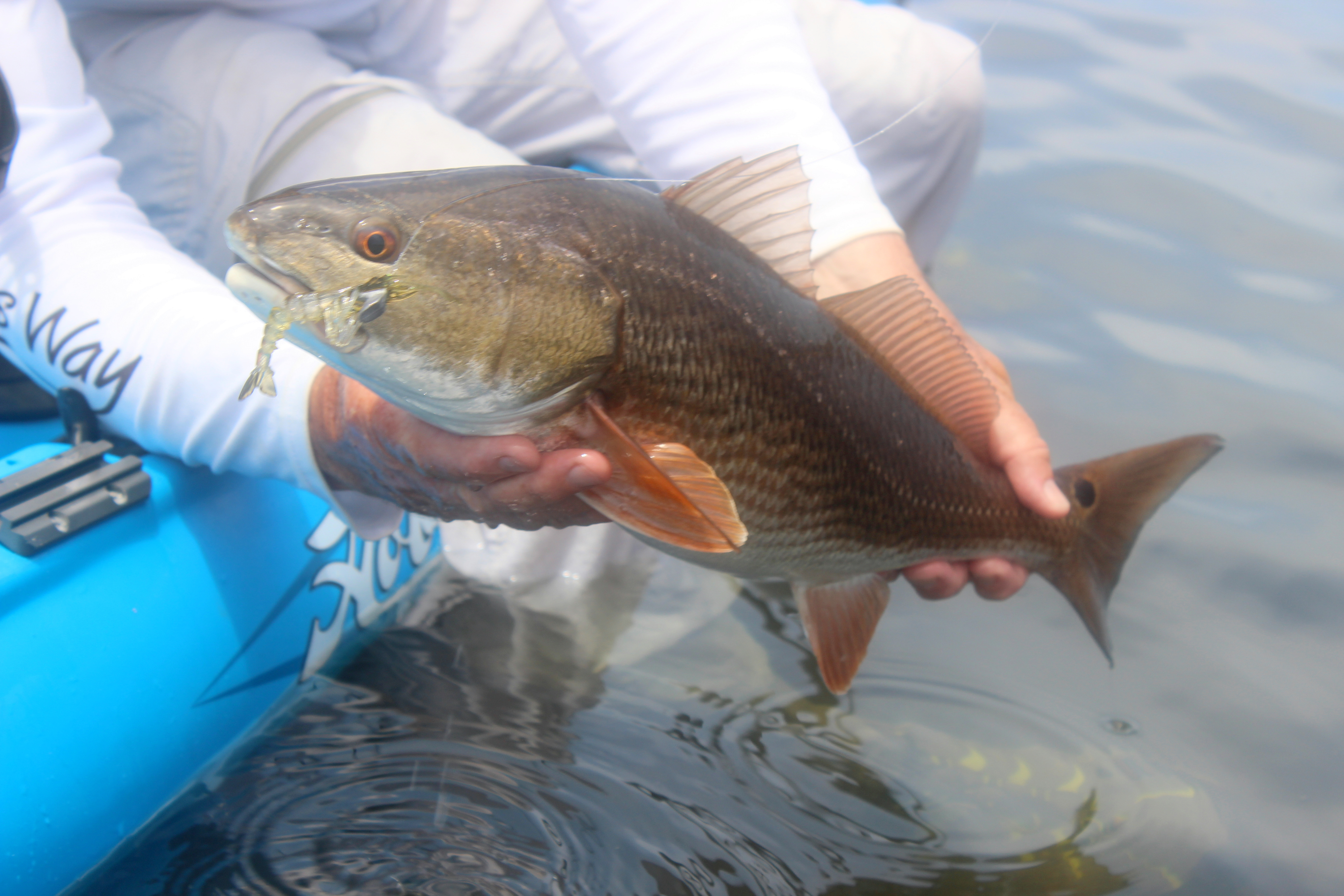 Florida's Fall Fishing Bonanza