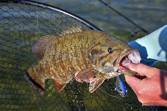 Fall Fishing Smallmouth