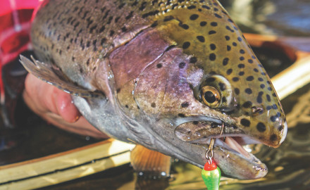 As the seasons change, consider these tips for big fall trout.  By M.D. Johnson  Silently I