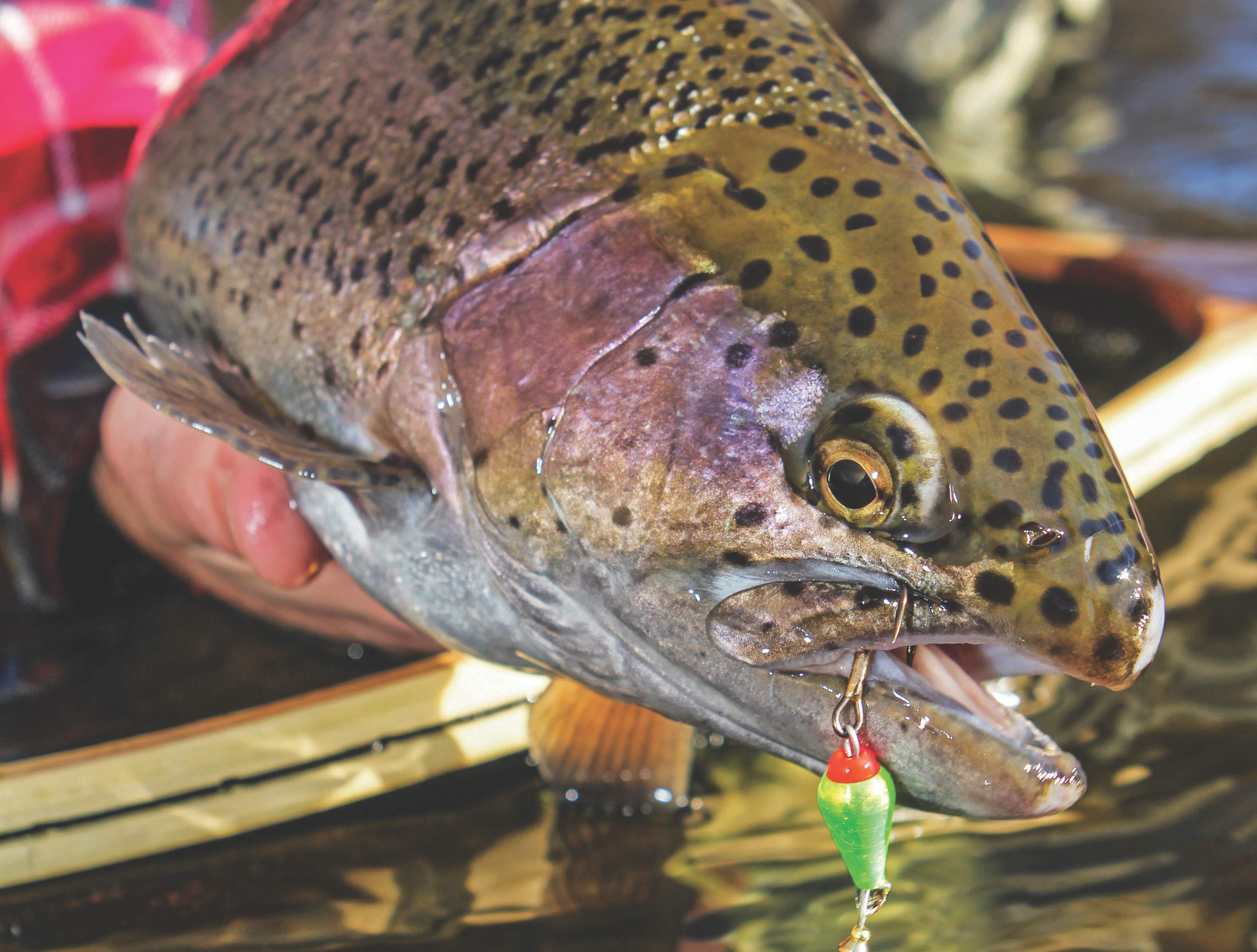 Fall Trout: Seasons Change, So Should Your Tactics