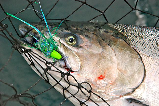 Michigan Salmon Spots This September