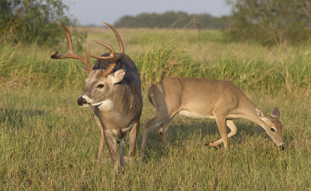 Is that even possible? Not only can you get some low-cost venison in Texas, says the author, but