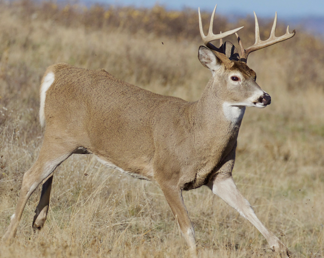 CWD at Deer Farms, Deadly Wolf Pack, Fish Kills: State Outdoors News