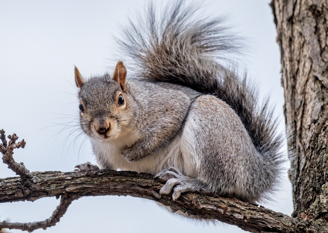 3 Fun Ways To Hunt Squirrels