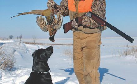 pheasant dog1_md_johnson feature
