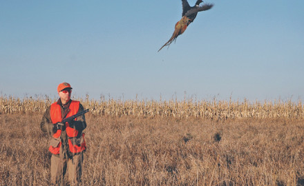 Three experts explain what they look for in a pheasant dog.  By M.D. Johnson  Based on our first