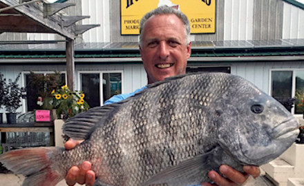 The state record sheepshead caught by a Maryland angler earlier this month beat the previous record