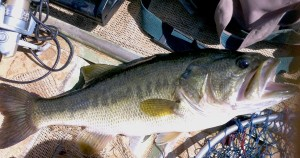 bass fishing outlook