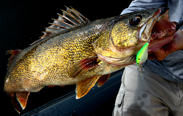 walleye rods and reels
