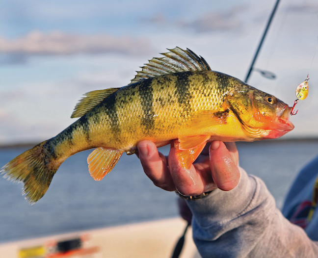 The Best of March Yellow Perch Fishing in New England