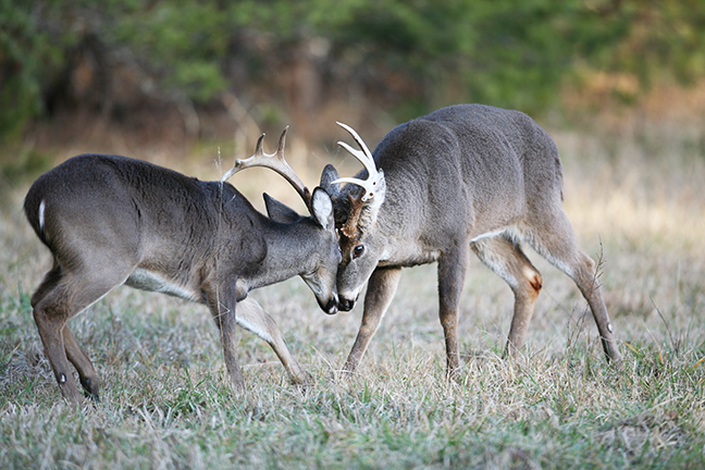 2017 Arkansas Deer Forecast Feature