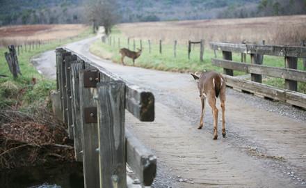 2017 Kentucky Deer Forecast Feature