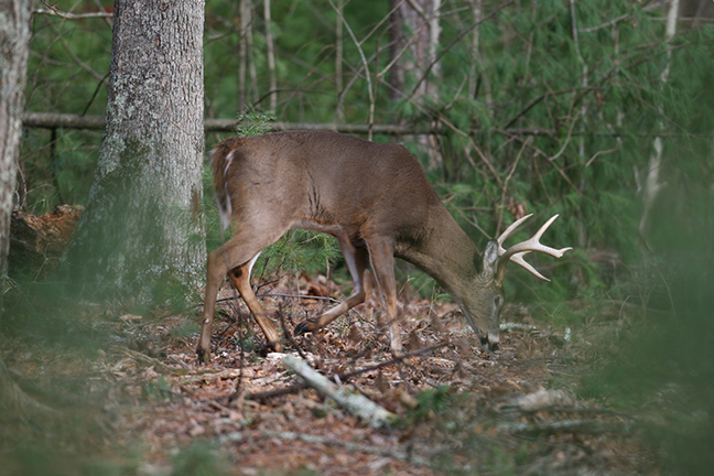 2017 Louisiana Deer Forecast Feature