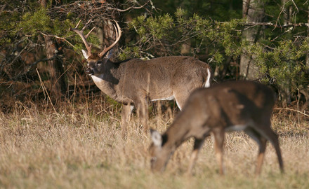 2017 Southern Deer Forecast Feature