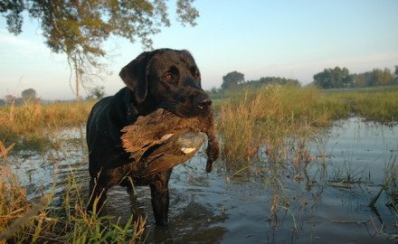 early teal