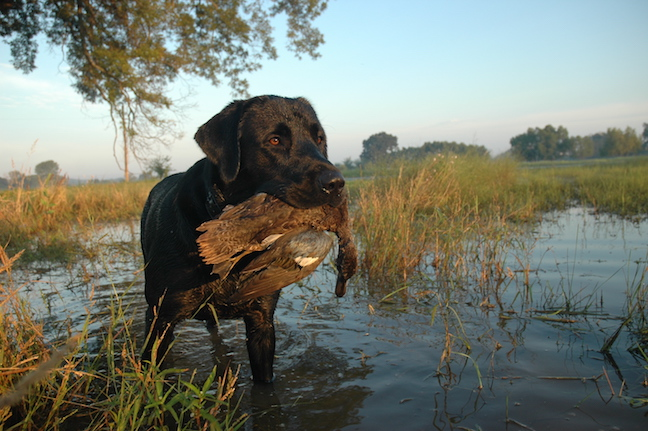7 Early Teal Hunting Hotspots