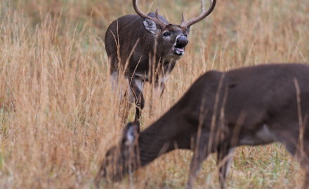 Parts of western Minnesota might not look like deer country, but the whitetails are there. Here are