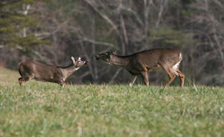 New England Deer Forecast