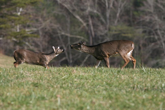 New England Deer Forecast