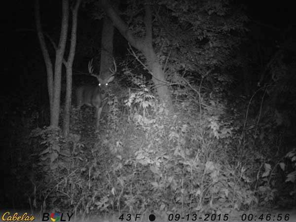 The greater the number of pixels your game camera delivers, the better your images will be. Better images will allow you to see (and enlarge) photos of distant deer to get a better look at their trophy quality.