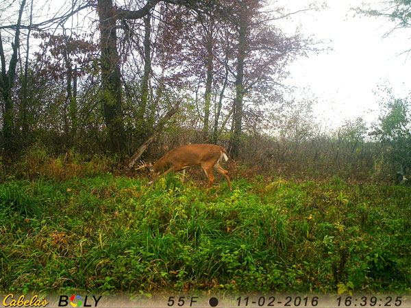 Choose a camera with at least a 100-foot daytime detection range in order to gather better deer intel.