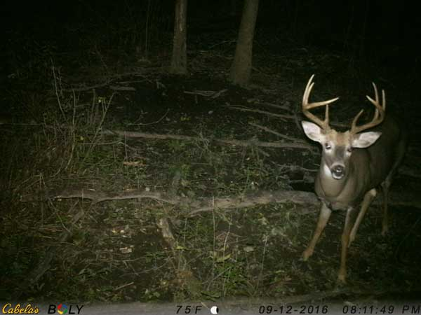 Trail cameras offering burst mode allow you the chance to capture images of a buck that might be following the doe that triggers your camera.