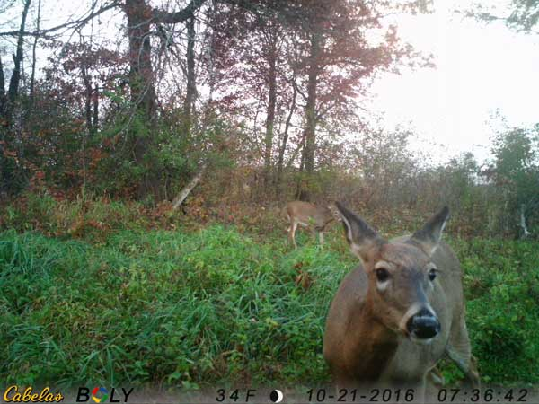 If you have a small food plot or maybe a pond worth monitoring, consider a game camera offering time-lapse mode so you can monitor those key early and late time periods.