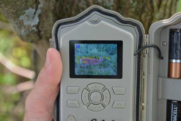 A trail camera with a built-in LCD screen is a great option because it makes setup a breeze and allows you to check images in the field without an extra device and a card reader.