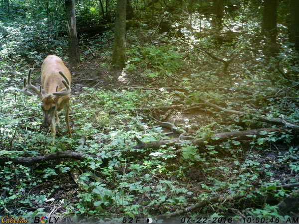 Better cameras, like Cabela's Outfitter Plus model, feature video capability. Monitoring a buck's body language can tell you how close to the rut you're getting, which can help determine stand choices and calling strategies.