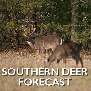 Southern-Deer-Forecast