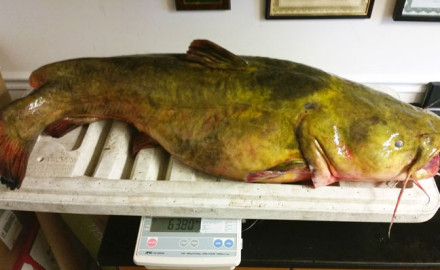 Game & Fish dived into the record books to find the catfish records for every state. How does