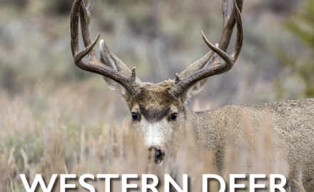 Want to discover the hottest deer-hunting counties in your state, or around the country?  Just