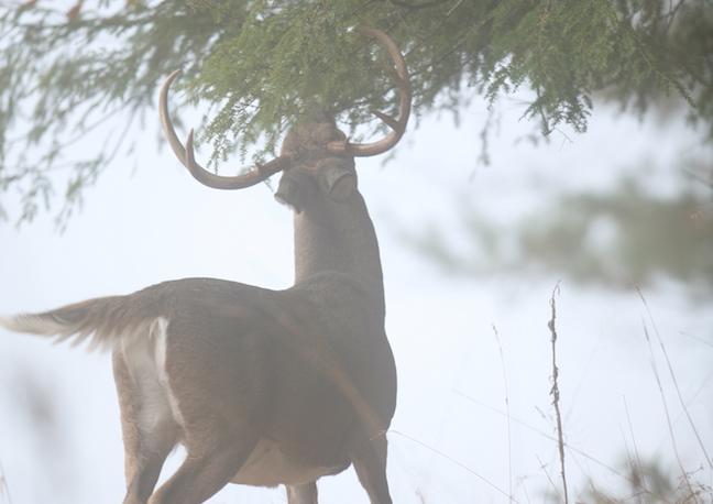 deer tactics