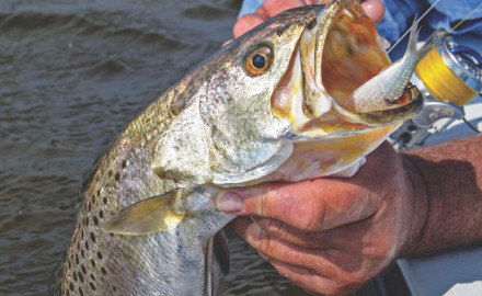 As water cools along the Alabama coast, reds, seatrout, flounder and more move closer in and become