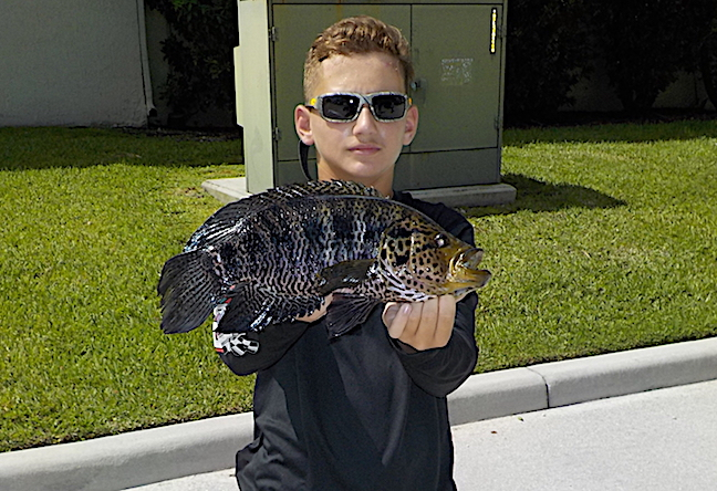 State Fishing Records: Minnesota Flathead, Florida Guapote