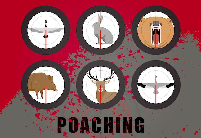 Poaching Updates: Shocking Cases, Busy Wardens, Trophy Takers