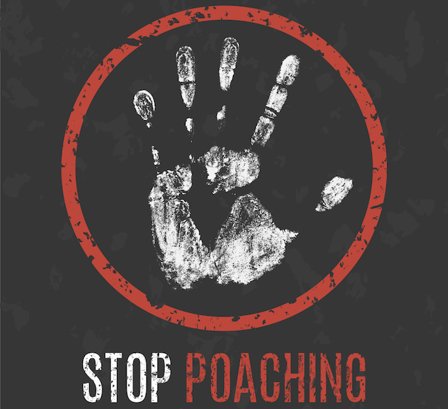 Poaching Probe, Hurricane Irma Closures, Deer Openers: State Outdoors News