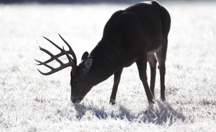 Iowa public land deer hunting