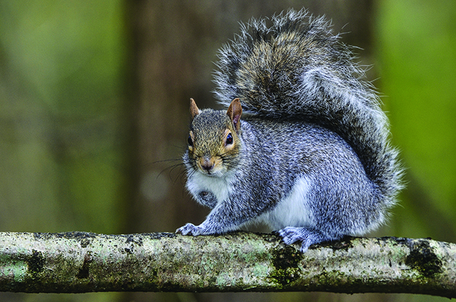 Fall Hunting In Alabama Forecast