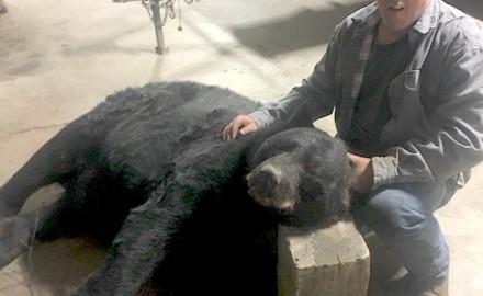 Georgia bear