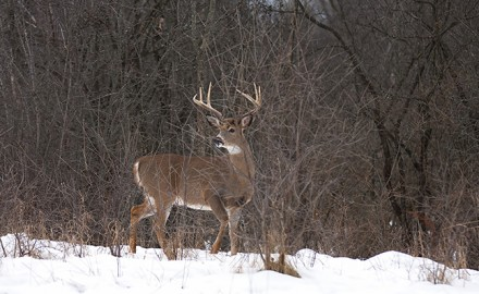 Deer can still be found in the late season. (Shutterstock image)  Does and big bucks alike are