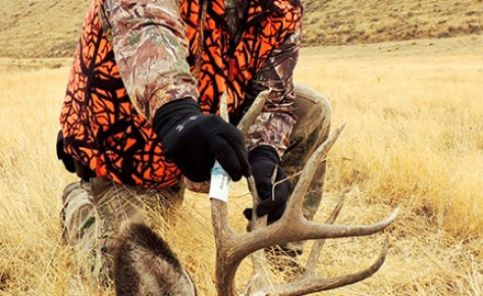 Shutterstock image  Deer hunters in Washington and Oregon can still fill a tag using these tips