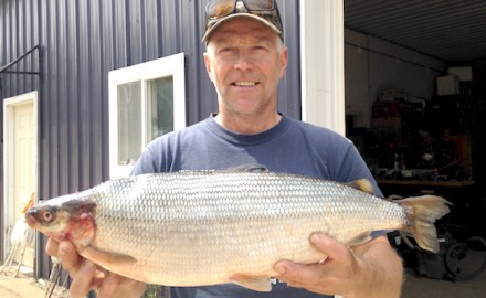 Michael Lemanski holds his Michigan state-record cisco. (Photo courtesy of Michigan DNR)  The man