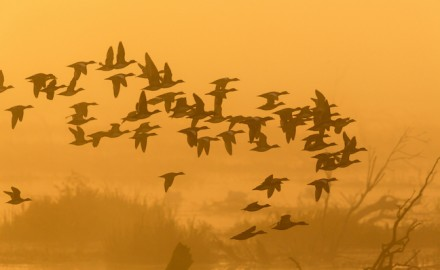 (Shutterstock image)  Here's a look at where the best goose and duck hunting is