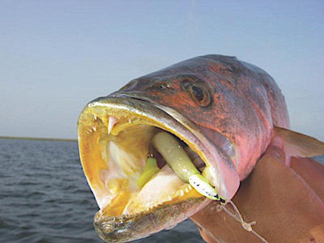 Gulf Coast Vacation Havens for Anglers