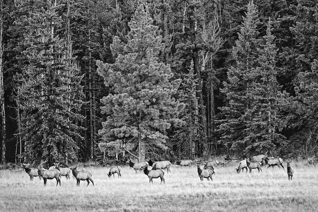 late-season elk