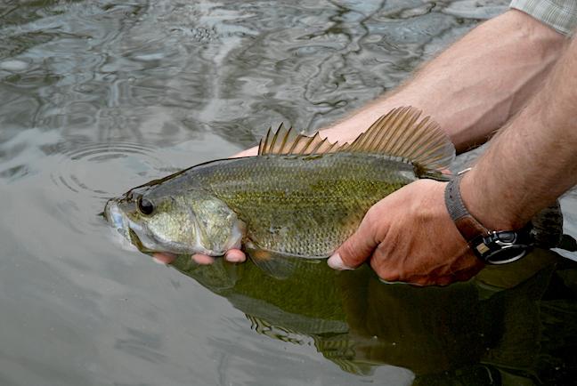 Ohio bass fishing