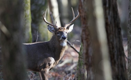 Hunters can still find success if they are prepared to hunt hard during the late season. (Photo by