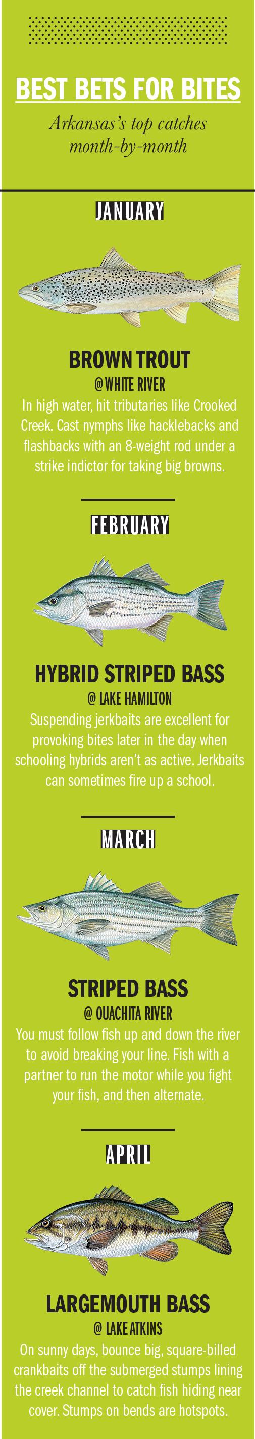 2018 Arkansas Fishing Calendar